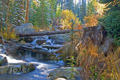 Colorado Wilderness. A stream in holy cross wilderness,colorado, during the autumn season Royalty Free Stock Images