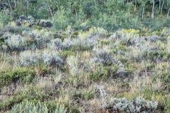 Colorado wildflower and shrub tapestry Stock Image