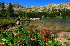 Colorado Wildflowers. Beautiful Lake and wildflowers in the High Country of Colorado Stock Photography