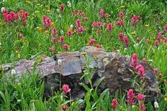 Colorado Wildflowers Stock Image