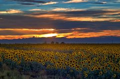 colorado zmierzch śródpolny słonecznikowy Zdjęcie Stock
