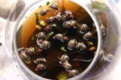 Coloradokevers en larven Stock Afbeeldingen