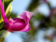 Colorants blancs de transport d'une fleur rose au printemps Images stock
