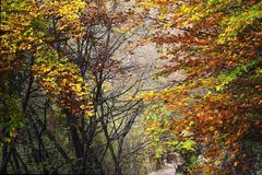 Autumn forest hides a pathway Stock Images