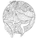 Coloration d'image d'anti tropiques d'effort illustration stock