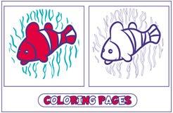 Coloration de poissons de perroquet Photos stock