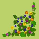 ColorBlossomsCornerGreen Royalty-vrije Stock Foto's