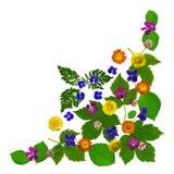 ColorBlossomsCornerWhite Stock Foto
