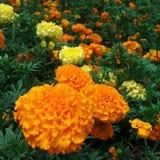Colore arancio Fotografia Stock