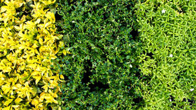 3 colore as folhas Imagens de Stock