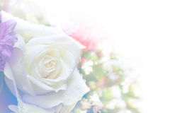 Colore astratto del fiore di Rosa alto e morbido chiave Fotografie Stock