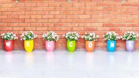 Colore benvenuto del fiore del vaso Fotografie Stock Libere da Diritti