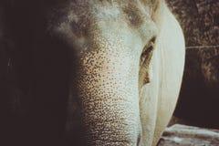 Colore d'annata dell'elefante fotografie stock libere da diritti