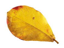 Colore del cambiamento delle foglie Immagine Stock Libera da Diritti