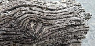 Colore del ceppo di struttura di legno della deriva fotografie stock libere da diritti