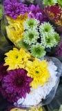 Colore del fiore Fotografie Stock Libere da Diritti