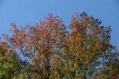 Colore dell'albero di autunno Fotografia Stock