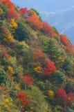 Colore dell'autunno fotografia stock libera da diritti