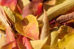 Colore della caduta Fotografie Stock