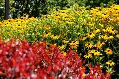 Colore della natura Fotografia Stock