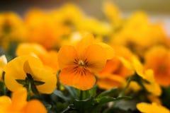 Colore della primavera Fotografia Stock Libera da Diritti