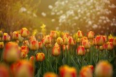 Colore della primavera Fotografie Stock