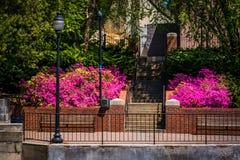 Colore della primavera lungo la passeggiata del canale di lungofiume a Richmond, vergine fotografia stock libera da diritti