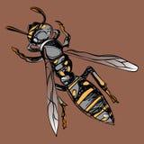 Colore della vespa nello stile grafico Fotografia Stock