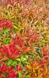 Colore delle foglie Fotografie Stock Libere da Diritti