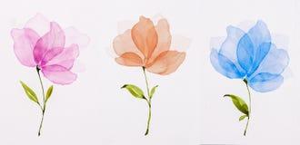 Colore di acqua dell'immagine, tiraggio della mano, fiori rosa, arancia, blu illustrazione vettoriale