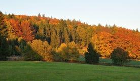 Colore di autunno Fotografie Stock