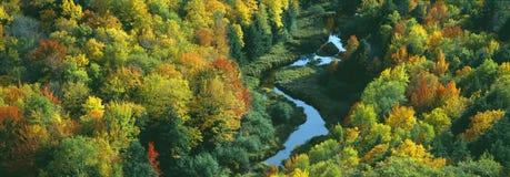 Colore di autunno alla sosta di condizione dell'istrice Fotografia Stock