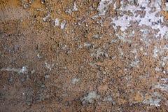 Colore di beige marrone ocraceo bianco e giallo sfaldato fotografie stock libere da diritti