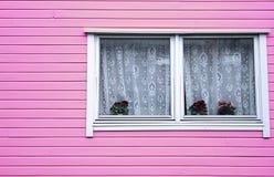 Colore di legno di rosa di rose del vaso di architettura della Camera Fotografia Stock
