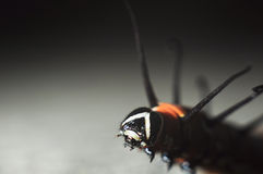 Colore di macro di Caterpillar Fotografia Stock Libera da Diritti