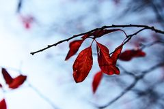 Colore di Winer Fotografie Stock