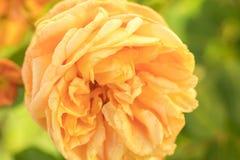 Colore e natura arancio fotografia stock libera da diritti