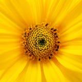 Colore giallo Immagini Stock Libere da Diritti