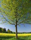 Colore giallo Fotografia Stock Libera da Diritti