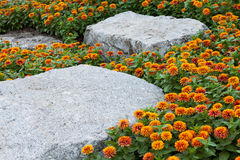 Colore giallo del tagete e priorità bassa della roccia. Fotografie Stock Libere da Diritti