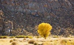 colore giallo dell'albero Immagine Stock Libera da Diritti