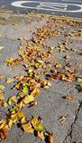 colore giallo dell'albero del foglio di caduta della priorità bassa di autunno Immagini Stock