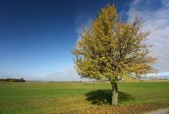 colore giallo dell'albero della cartolina fotografia stock libera da diritti