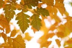 colore giallo di caduta immagine stock