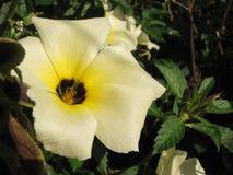 Colore giallo e bianco Immagine Stock Libera da Diritti