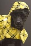 Colore giallo e Checkered immagine stock libera da diritti