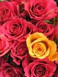 Colore giallo e colori rossi Immagini Stock