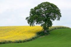 Colore giallo e verde Immagine Stock