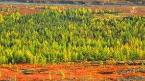Colore giallo e verde di autunno Immagine Stock