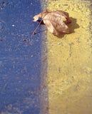 Colore giallo ed azzurro Immagini Stock